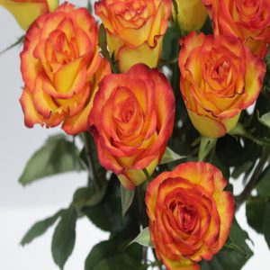Orange Roses Flower Bouquet - SKUFLR04 - Flowers, Cakes and Gifts delivery in Dubai UAE