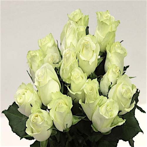 Cream Color Roses Flower Bouquet - SKUFLR06 - Flowers, Cakes and Gifts delivery in Dubai UAE